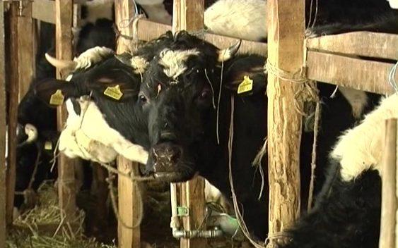 Субвенции за домашни раси добиток
