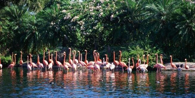 Photo of Се бара одгледувач на Фламинго на Бахамите