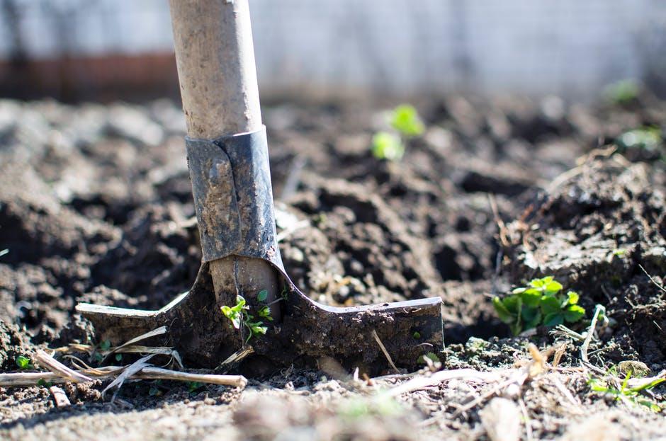 Photo of Субвенциите за градинарите по четири основи