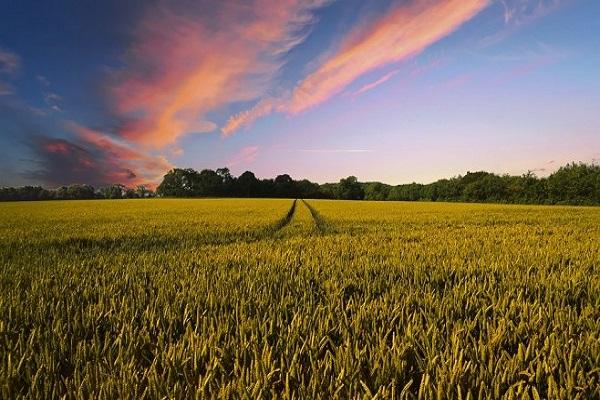 Photo of Кина купува земјоделско земјиште ширум светот