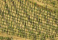 До 28 Февруари пријавување за нови овошни и лозови насади, и стока