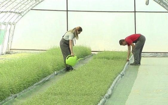 Мерки за поддршка на градинарството