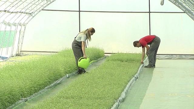 Photo of Мерки за поддршка на градинарството