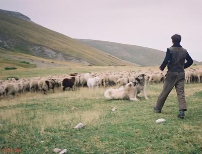 Photo of Овчарите ќе добиваат неповратна помош за плати