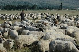 Photo of Календар за овчарство за месец февруари