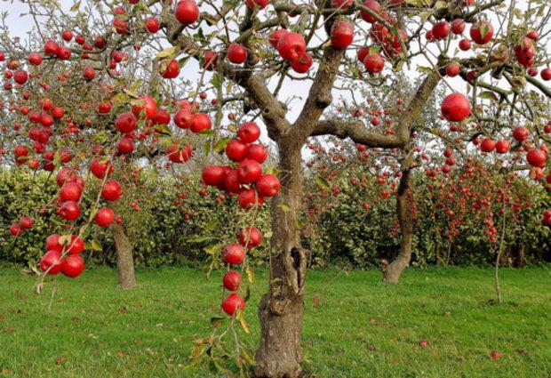 Photo of Ќе има Јавен повик за нови инвестиции во сточарството, лозарството, овоштарството и пчеларството