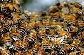 Photo of Доделени се медоносни дрвца на пчеларите од Македонска Каменица