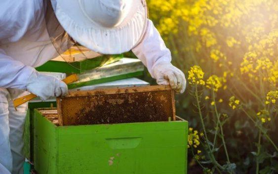 Заработете и до 100.000 долари од производ од пчели