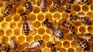 Photo of Нега на пчели во февруари