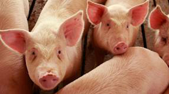 Photo of Работилница за унапредување на системот за идентификација на свињите