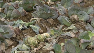 Photo of Родот скапува – градинарите бараат помош