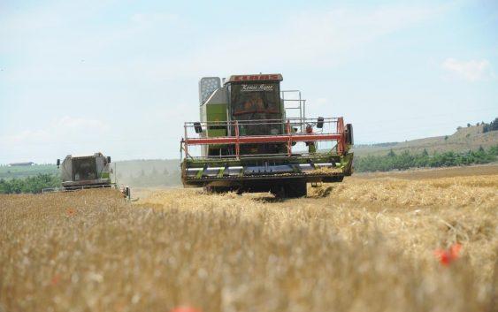 Увозот на пченица ги става во  опасност домашните производители