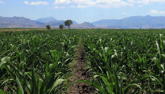 Пролетните култури во Дебарско ќе бидат засеани на 300 хектари
