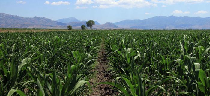 Photo of Пролетните култури во Дебарско ќе бидат засеани на 300 хектари