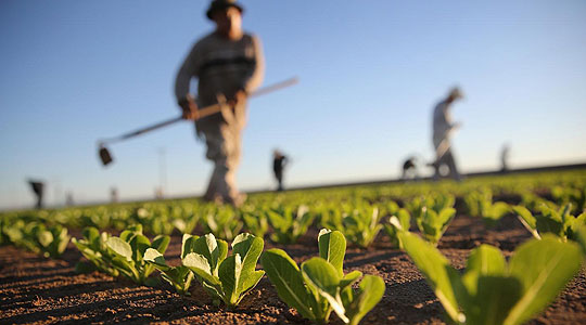 Photo of Николовски на трибина со земјоделци и откупувачи на градинарски производи
