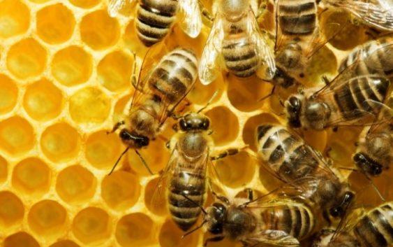 Пчеларите од охридскиот регион се жалат на ланските априлски мразеви