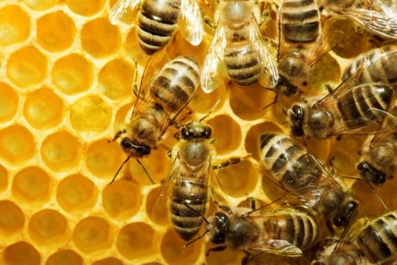 Photo of Пчеларите од охридскиот регион се жалат на ланските априлски мразеви