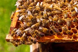 Photo of Не дозволувајте пчелите да останат гладни во текот на зимата