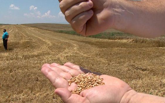Субвенции за замена на житни култури со нови насади