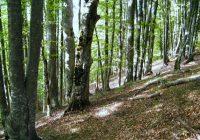 Речиси 40 проценти од територијата на ЕУ е покриена со шуми
