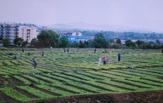 Во прилепско привршува издавањето на белите картони за новата тутунопроизводствена реколта