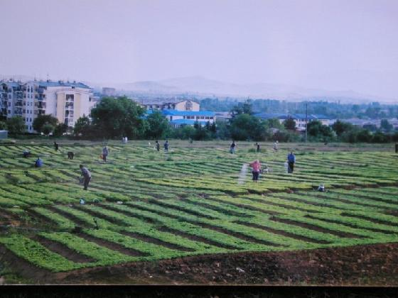 Photo of Во прилепско привршува издавањето на белите картони за новата тутунопроизводствена реколта