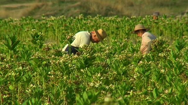 Photo of Зголемен интерес за ново производство на тутун