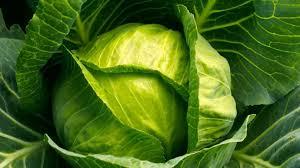 Photo of Производителите на зелка со закани – излегуваме на улица ако цената падне под 25 денари за килограм