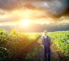 Photo of Земјоделците ќе добијат 30 отсто повисоки субвенции за пренамена на култура
