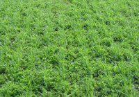 Во време на субвенции-пад кај сите посеви и овошје и намалување на земјоделските површини