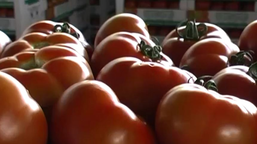 Photo of Во Македонија не се увезени турски домати со спорна декларација