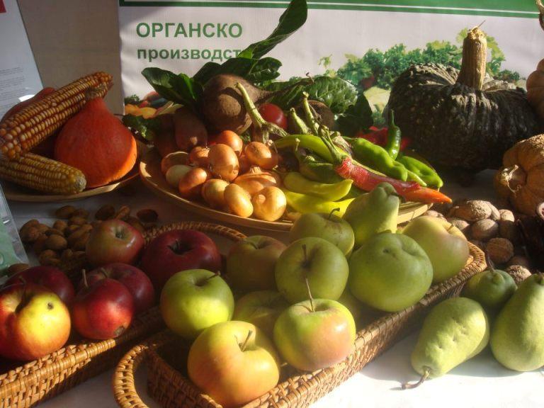 Photo of Социјално претприемништво како терапија, со органско производство во борба против зависност од дрога