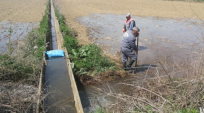 Photo of Започна полнењето на оризовите полиња во Кочанско