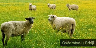 Photo of Поголема поддршка за овчарството