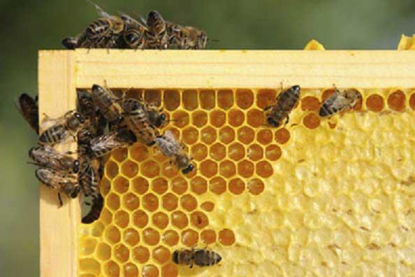 Photo of Пчеларство – календар за месец април