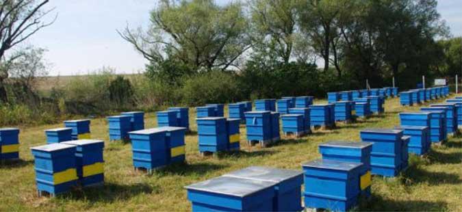 Photo of Едукација на кривопаланечките пчелари за современо производство на пчелни продукти