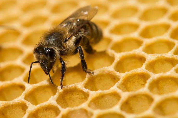 Photo of Пчеларите очекуваат добра година