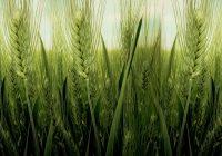 ЕУ дава 2 милиони евра за постојните и за создавање нови земјоделски задруги