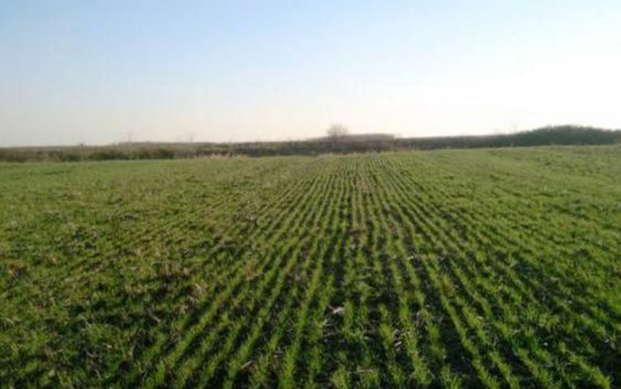 Уделот на земјоделството во БДП зголемен за 5,1