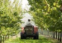 Прскањето на јаболката во Преспа намалено за третина