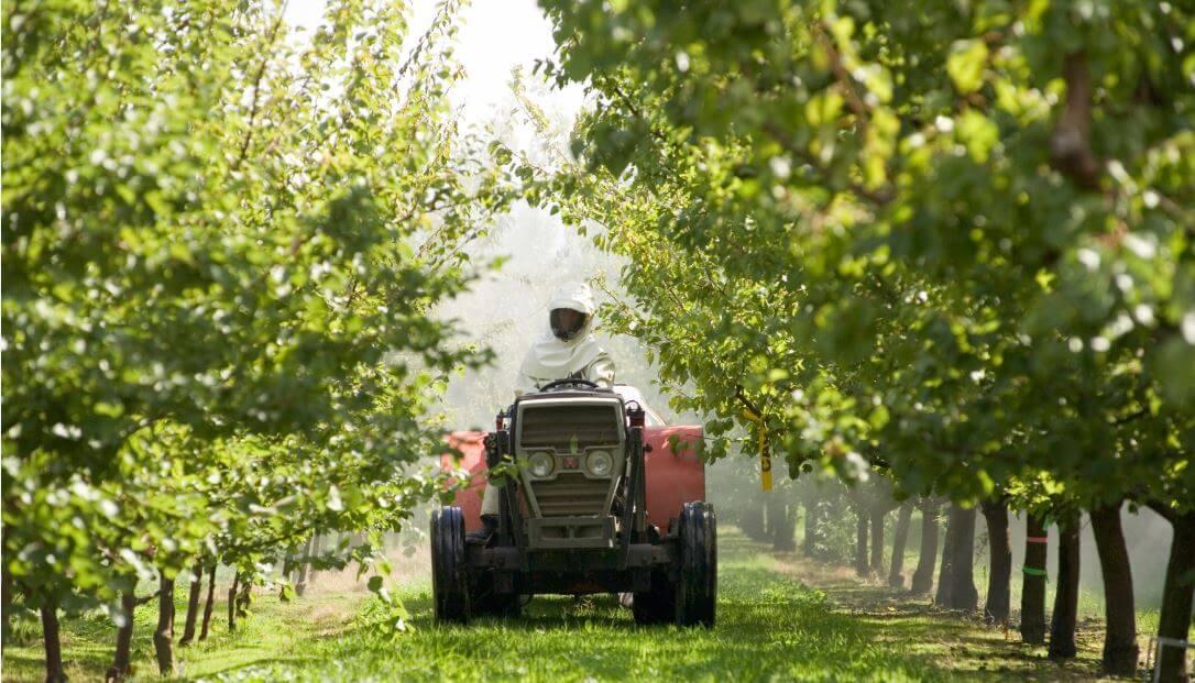 Photo of Прскањето на јаболката во Преспа намалено за третина