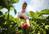 Овошка од која месечно може да се заработат 300 евра