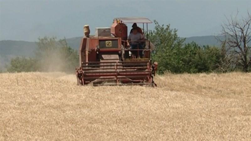 Photo of Агросоветот ќе одлучува дали да се откупат 12.000 тони домашна пченица за стоковните резерви