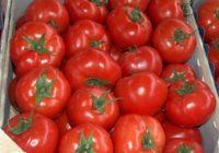 17 тони македонски домат со штетник откриен во Калининград