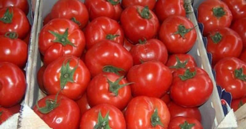 Photo of 17 тони македонски домат со штетник откриен во Калининград