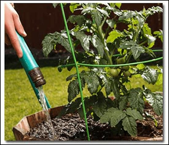 Photo of Колку и како да се наводнуваат зеленчукот и растенијата во текот на пролетта и летото?