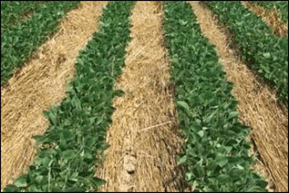 Photo of Без механичка обработка на земјиштето, веќе 27 години успешно сее соја и пченка
