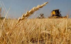 Photo of Поледелски култури – земјоделски календар за месец јуни