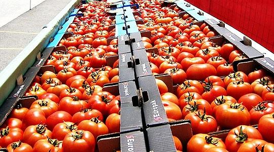 Photo of Земјоделците од струмичко реагираат на ниските откупни цени на доматите