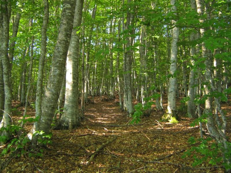Photo of Голема побарувачка за француското дабово дрво во Кина